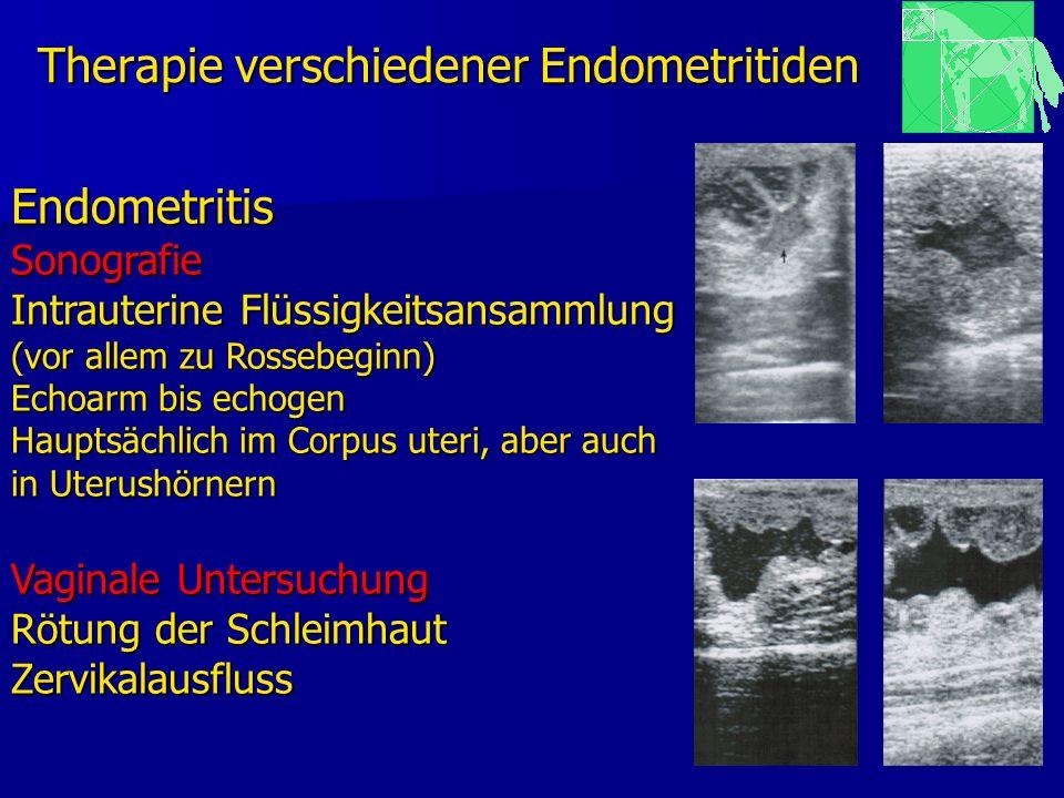 Therapie verschiedener Endometritiden EndometritisSonografie Intrauterine Flüssigkeitsansammlung (vor allem zu Rossebeginn) Echoarm bis echogen Haupts