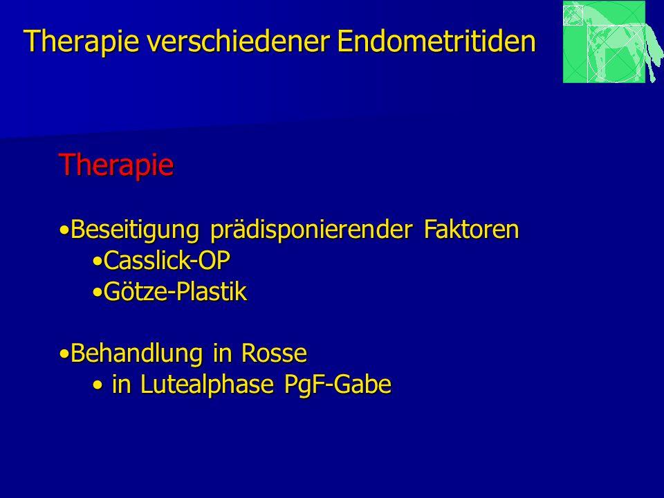 Therapie verschiedener Endometritiden Therapie Beseitigung prädisponierender FaktorenBeseitigung prädisponierender Faktoren Casslick-OPCasslick-OP Göt