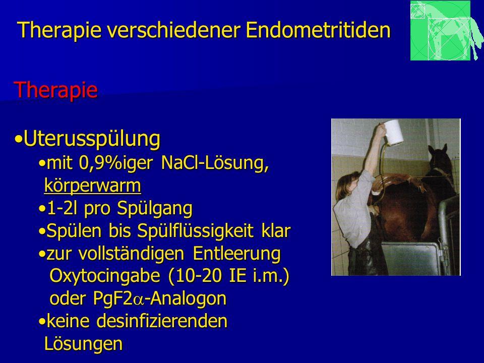 Therapie verschiedener Endometritiden Therapie UterusspülungUterusspülung mit 0,9%iger NaCl-Lösung,mit 0,9%iger NaCl-Lösung, körperwarm körperwarm 1-2