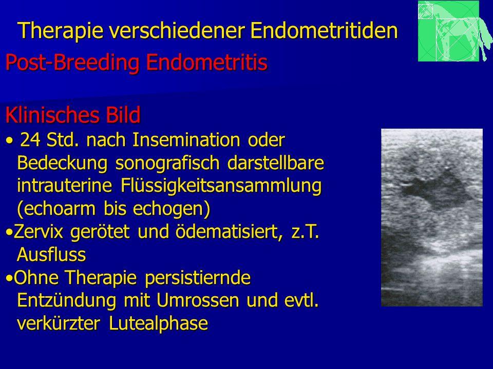 Therapie verschiedener Endometritiden Post-Breeding Endometritis Klinisches Bild 24 Std. nach Insemination oder 24 Std. nach Insemination oder Bedecku