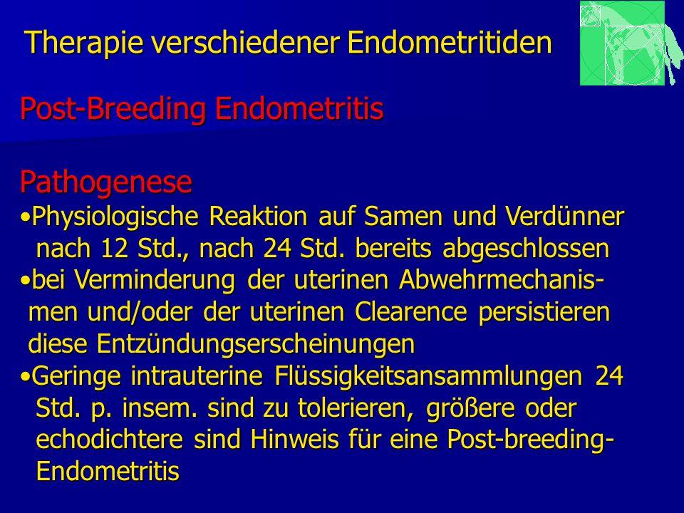 Therapie verschiedener Endometritiden Post-Breeding Endometritis Pathogenese Physiologische Reaktion auf Samen und VerdünnerPhysiologische Reaktion au