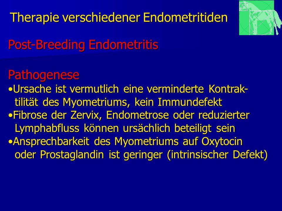 Therapie verschiedener Endometritiden Post-Breeding Endometritis Pathogenese Ursache ist vermutlich eine verminderte Kontrak-Ursache ist vermutlich ei