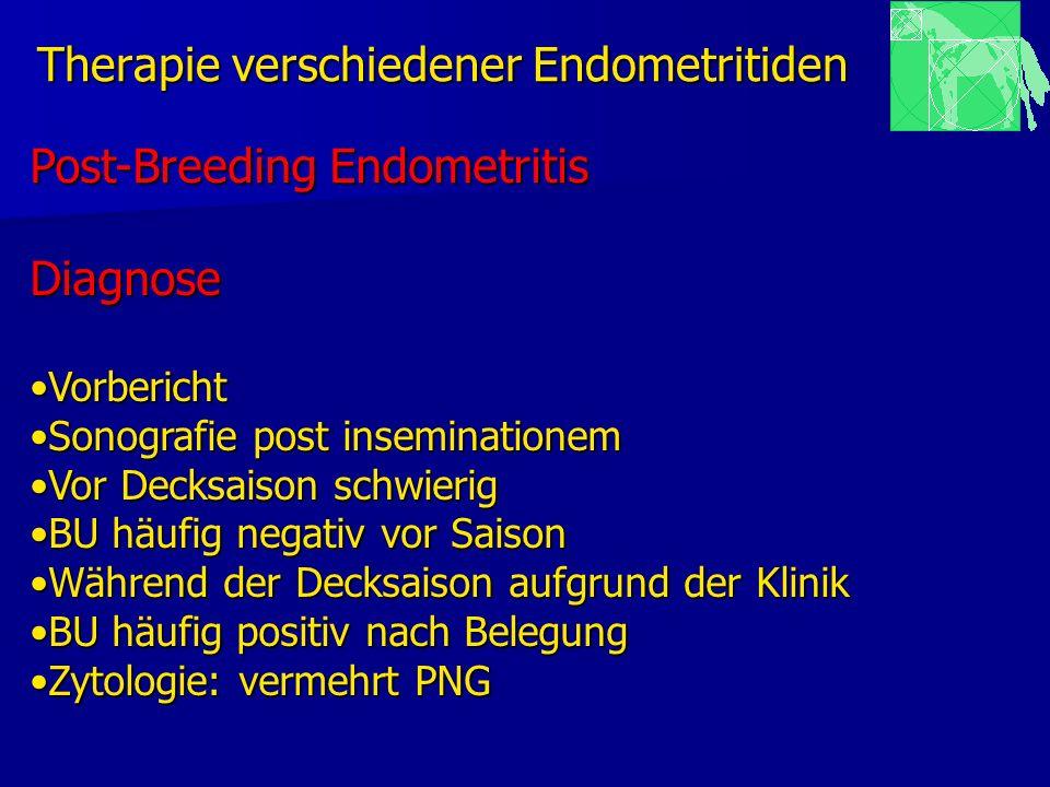 Therapie verschiedener Endometritiden Post-Breeding Endometritis Diagnose VorberichtVorbericht Sonografie post inseminationemSonografie post inseminat