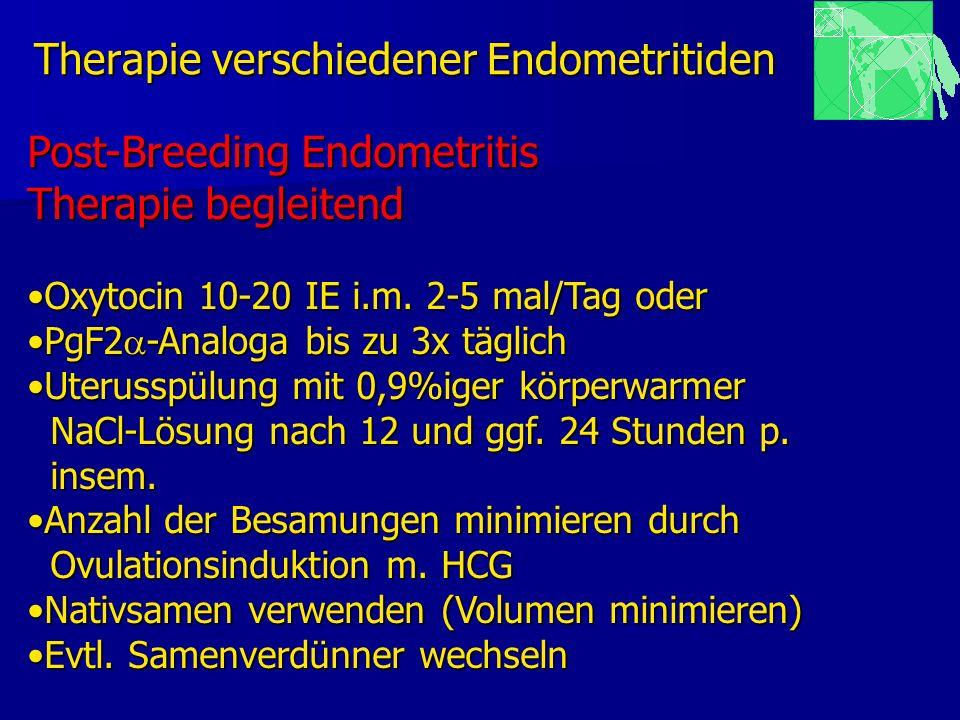 Therapie verschiedener Endometritiden Post-Breeding Endometritis Therapie begleitend Oxytocin 10-20 IE i.m. 2-5 mal/Tag oderOxytocin 10-20 IE i.m. 2-5