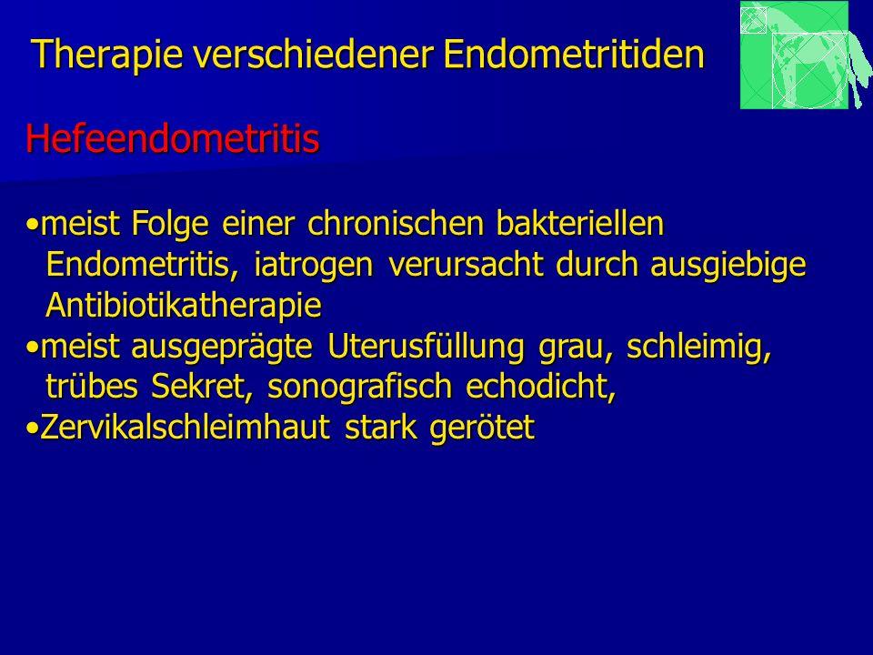 Therapie verschiedener Endometritiden Hefeendometritis meist Folge einer chronischen bakteriellenmeist Folge einer chronischen bakteriellen Endometrit
