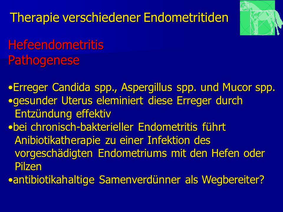 Therapie verschiedener Endometritiden HefeendometritisPathogenese Erreger Candida spp., Aspergillus spp. und Mucor spp.Erreger Candida spp., Aspergill