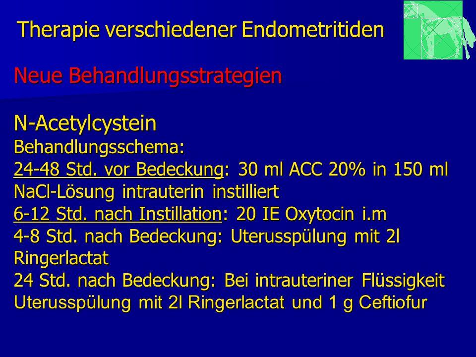 Therapie verschiedener Endometritiden Neue Behandlungsstrategien N-AcetylcysteinBehandlungsschema: 24-48 Std. vor Bedeckung: 30 ml ACC 20% in 150 ml N