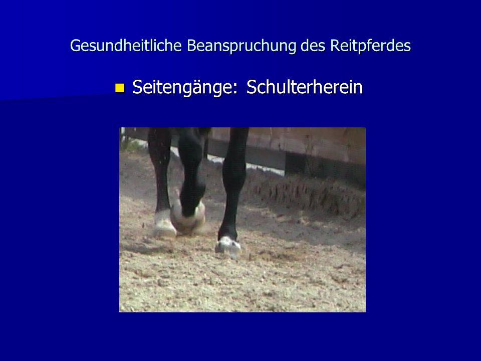 Gesundheitliche Beanspruchung des Reitpferdes Seitengänge: Schulterherein Seitengänge: Schulterherein