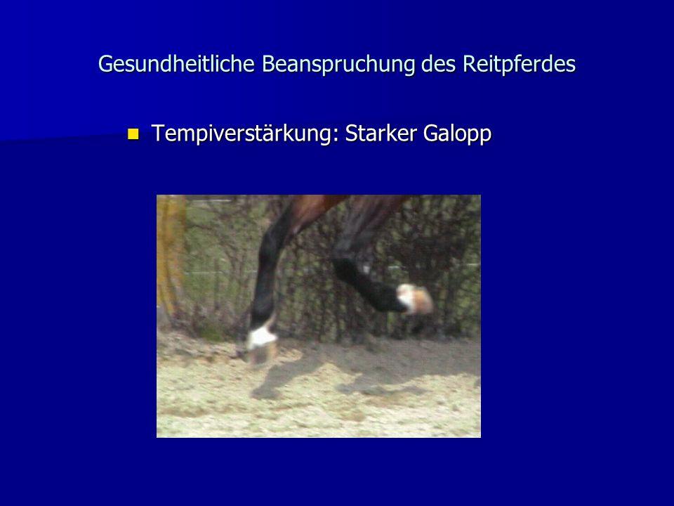 Gesundheitliche Beanspruchung des Reitpferdes Tempiverstärkung: Starker Galopp Tempiverstärkung: Starker Galopp