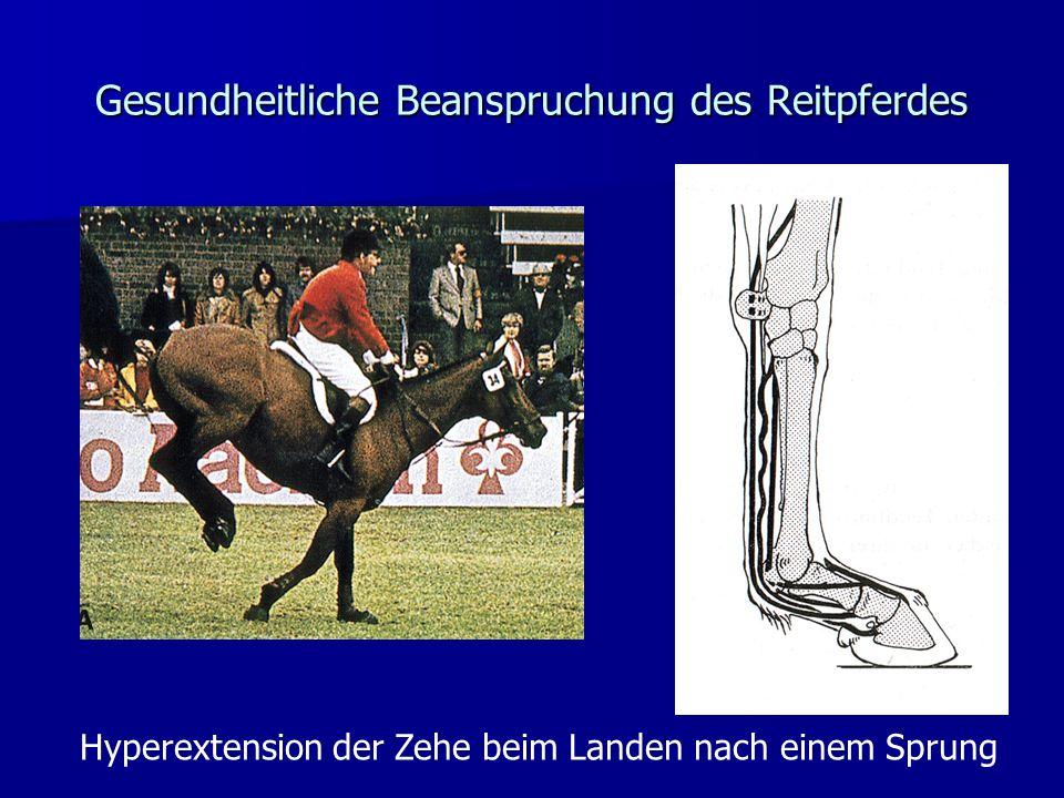 Gesundheitliche Beanspruchung des Reitpferdes Hyperextension der Zehe beim Landen nach einem Sprung