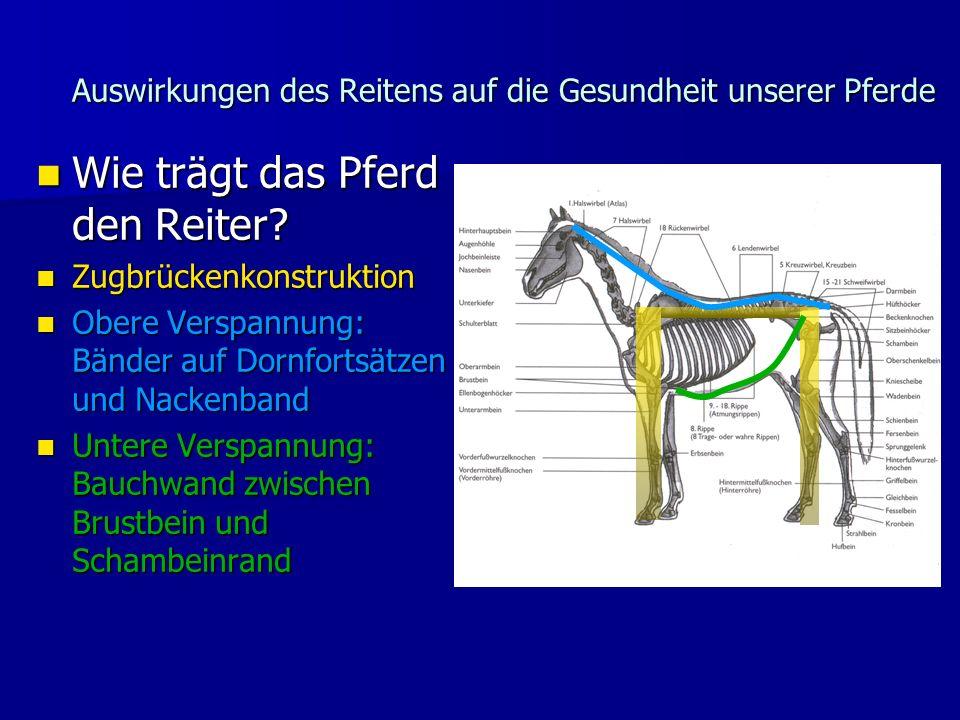 Auswirkungen des Reitens auf die Gesundheit unserer Pferde Wie trägt das Pferd den Reiter.