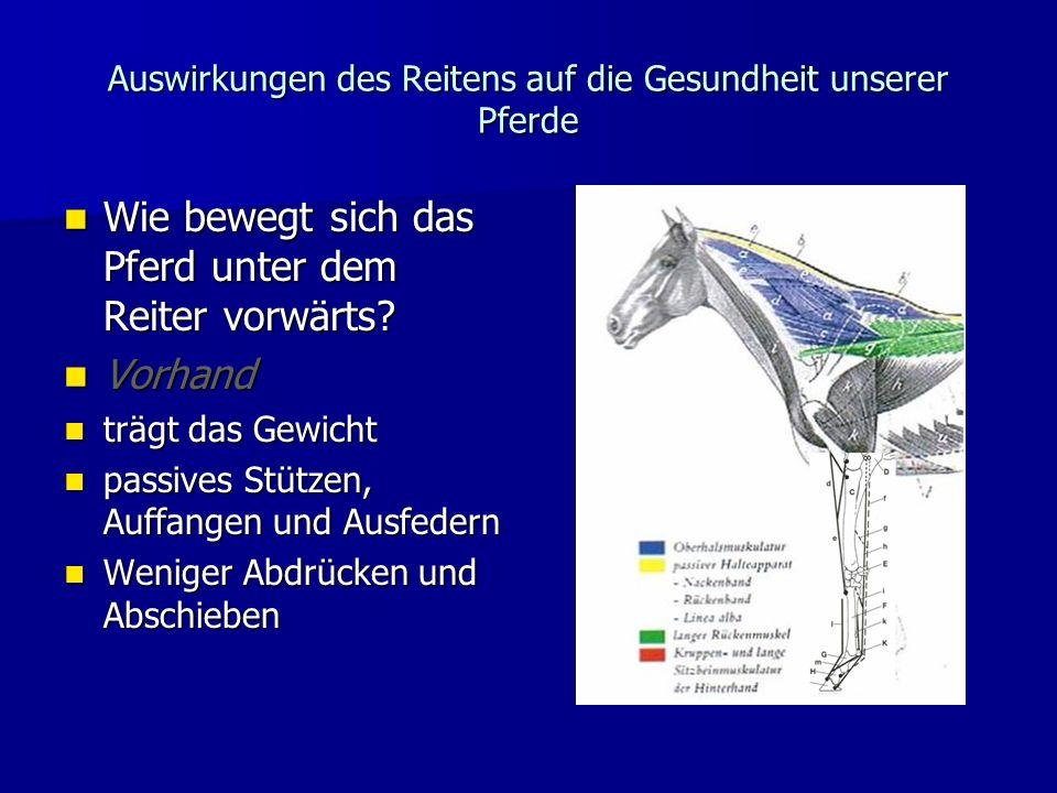 Auswirkungen des Reitens auf die Gesundheit unserer Pferde Wie bewegt sich das Pferd unter dem Reiter vorwärts.