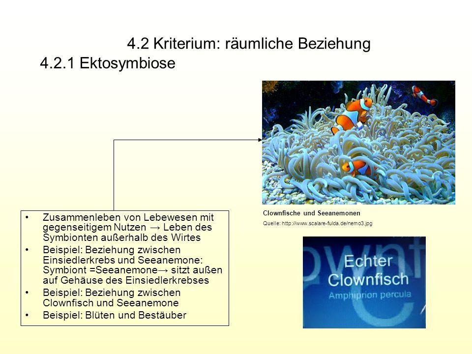 4.2 Kriterium: räumliche Beziehung Zusammenleben von Lebewesen mit gegenseitigem Nutzen Leben des Symbionten außerhalb des Wirtes Beispiel: Beziehung