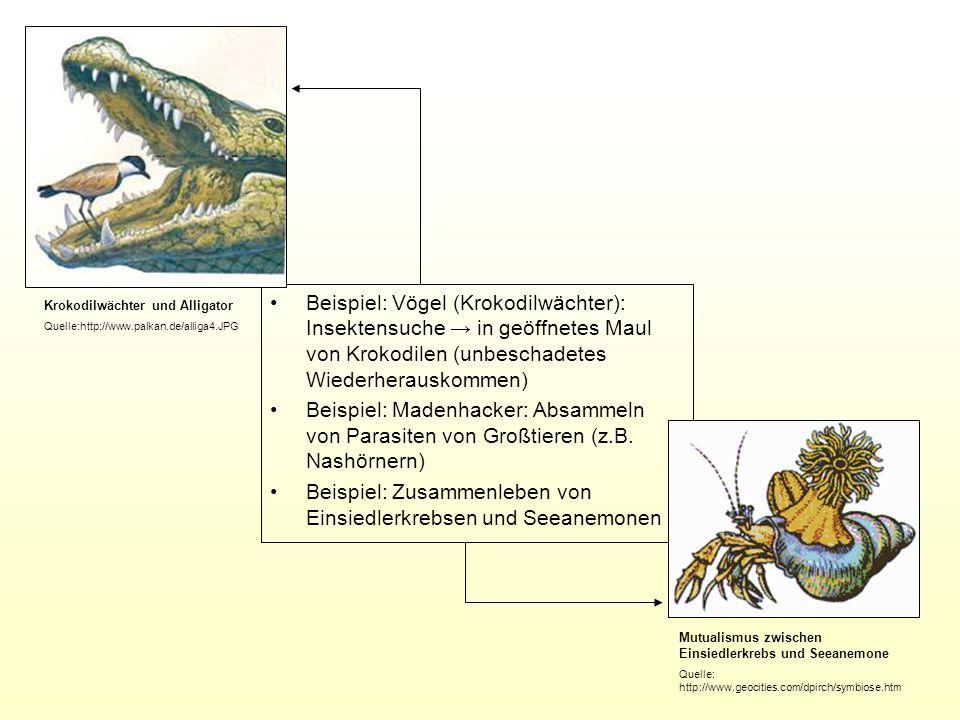 Beispiel: Vögel (Krokodilwächter): Insektensuche in geöffnetes Maul von Krokodilen (unbeschadetes Wiederherauskommen) Beispiel: Madenhacker: Absammeln