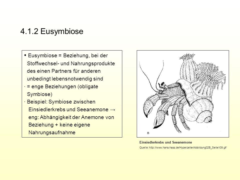 4.1.2 Eusymbiose Eusymbiose = Beziehung, bei der Stoffwechsel- und Nahrungsprodukte des einen Partners für anderen unbedingt lebensnotwendig sind = en