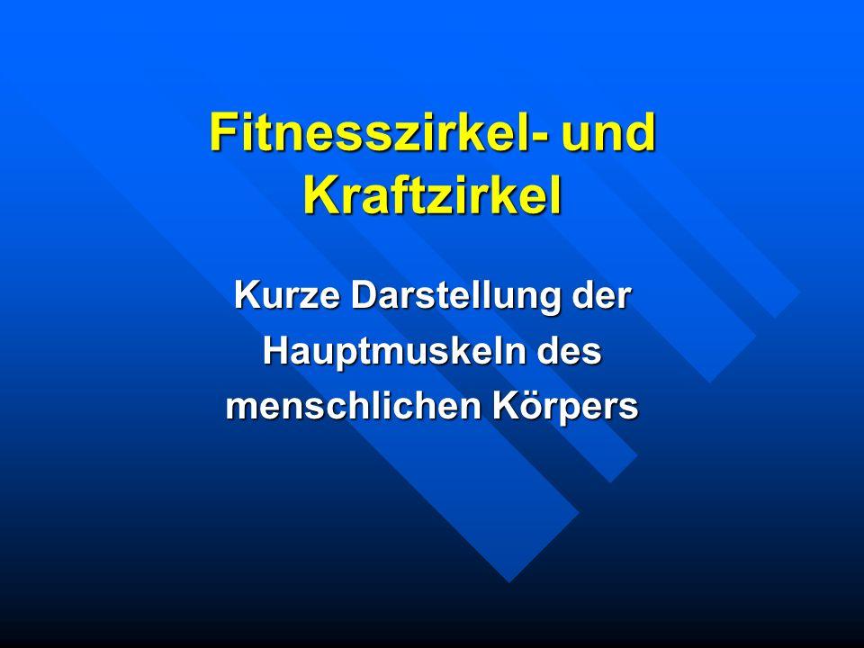 Fitnesszirkel- und Kraftzirkel Kurze Darstellung der Hauptmuskeln des menschlichen Körpers