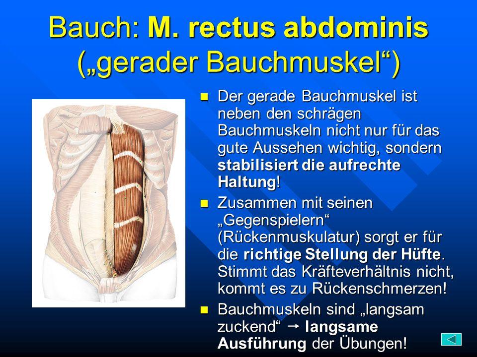 Bauch: M. rectus abdominis (gerader Bauchmuskel) Der gerade Bauchmuskel ist neben den schrägen Bauchmuskeln nicht nur für das gute Aussehen wichtig, s