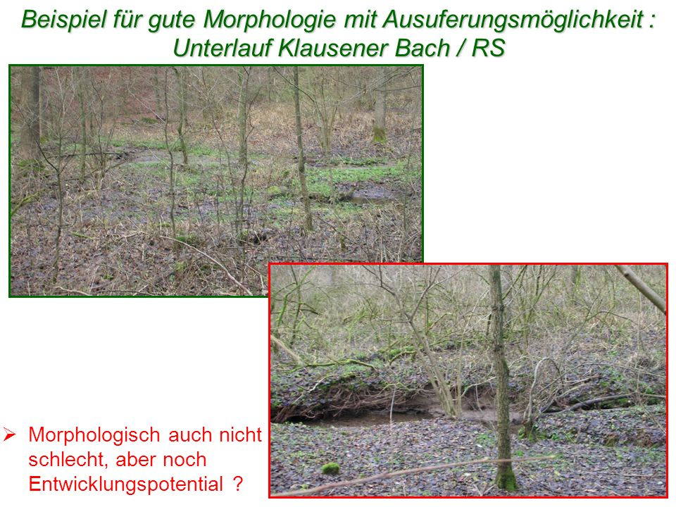 www.WUPPERVERBAND.de Beispiel für gute Morphologie mit Ausuferungsmöglichkeit : Unterlauf Klausener Bach / RS Morphologisch auch nicht schlecht, aber
