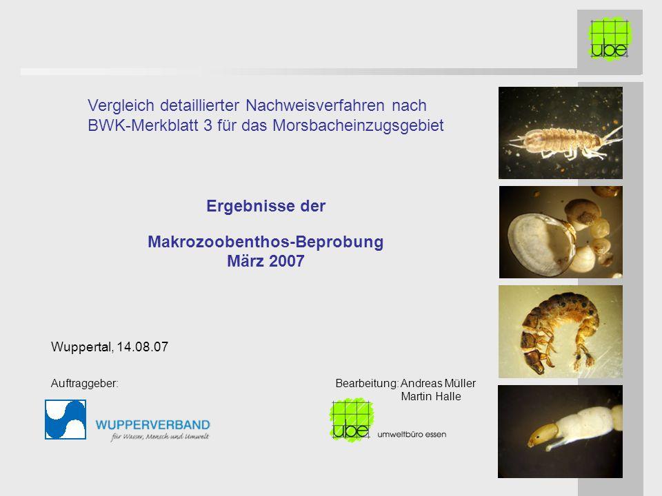 Ergebnisse der Makrozoobenthos-Beprobung März 2007 Vergleich detaillierter Nachweisverfahren nach BWK-Merkblatt 3 für das Morsbacheinzugsgebiet Wuppertal, 14.08.07 Auftraggeber: Bearbeitung: Andreas Müller Martin Halle