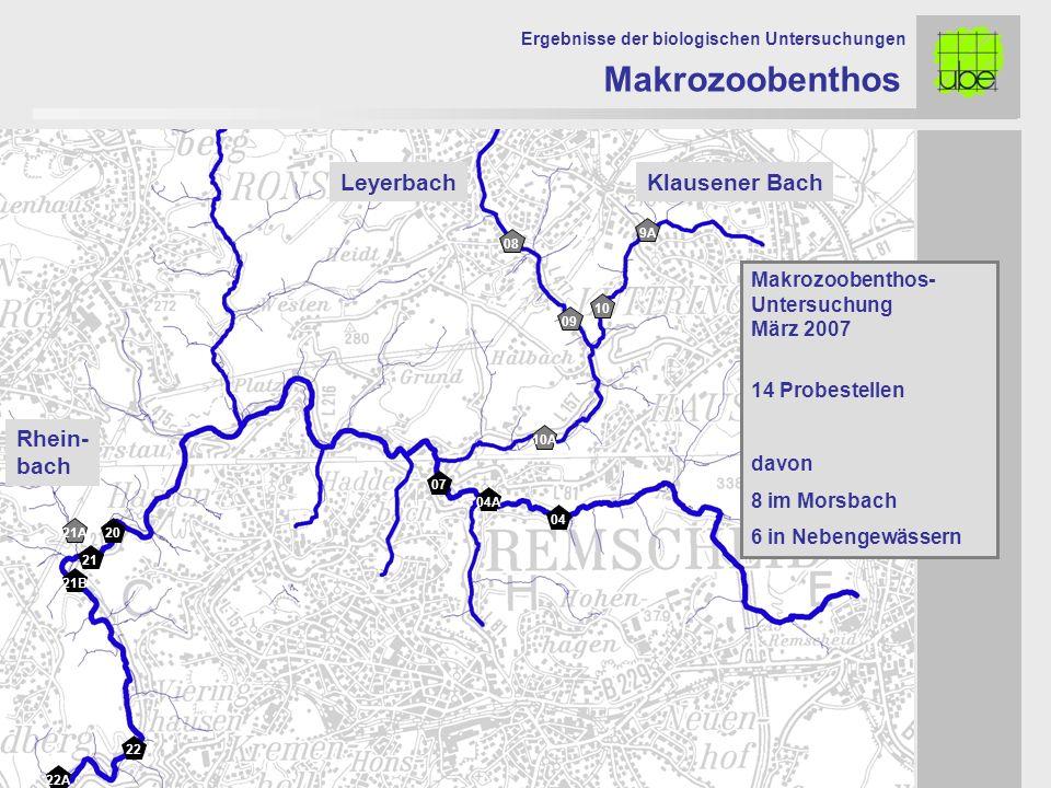 22 21 20 07 04A 04 Makrozoobenthos Ergebnisse der biologischen Untersuchungen 22A 21B Makrozoobenthos- Untersuchung März 2007 14 Probestellen davon 8 im Morsbach 6 in Nebengewässern 08 09 10 10A 21A 9A LeyerbachKlausener Bach Rhein- bach