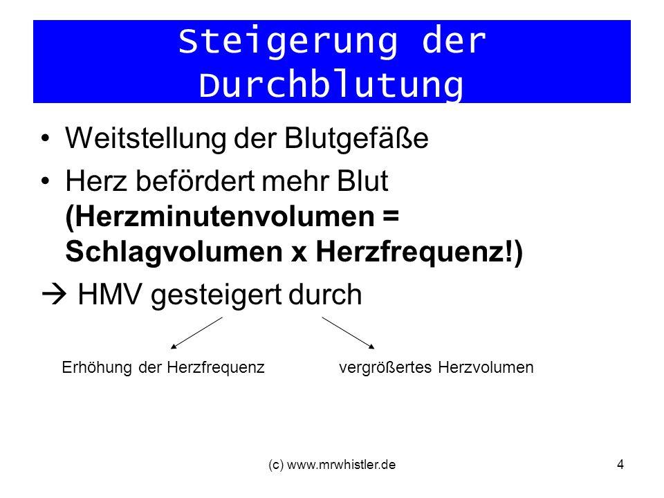 (c) www.mrwhistler.de4 Steigerung der Durchblutung Weitstellung der Blutgefäße Herz befördert mehr Blut (Herzminutenvolumen = Schlagvolumen x Herzfreq