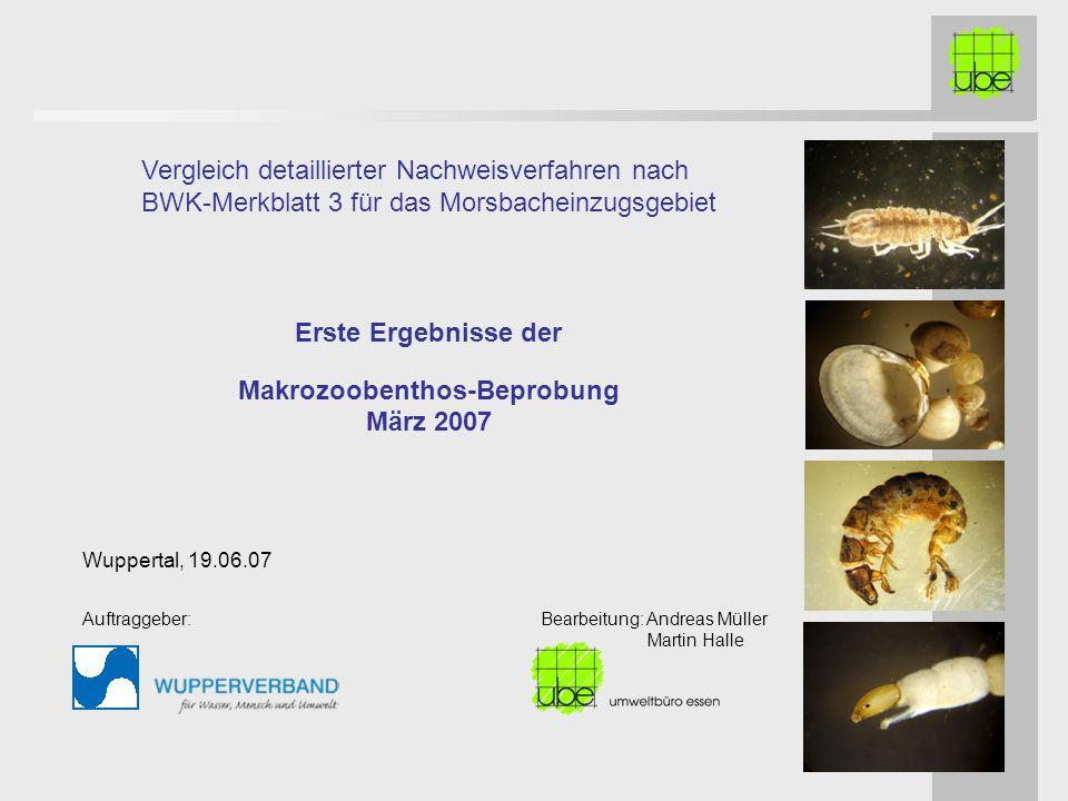 Erste Ergebnisse der Makrozoobenthos-Beprobung März 2007 Vergleich detaillierter Nachweisverfahren nach BWK-Merkblatt 3 für das Morsbacheinzugsgebiet Wuppertal, 19.06.07 Auftraggeber: Bearbeitung: Andreas Müller Martin Halle