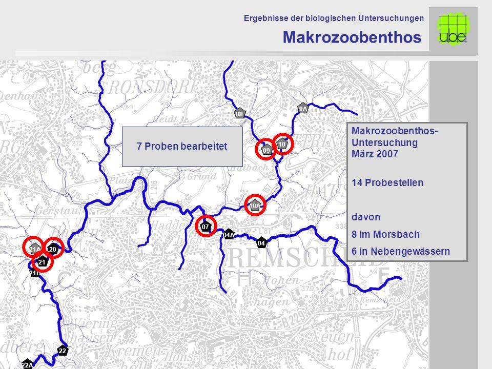 22 21 20 08 09 10 10A 07 04A 04 Makrozoobenthos Ergebnisse der biologischen Untersuchungen Makrozoobenthos- Untersuchung März 2007 14 Probestellen davon 8 im Morsbach 6 in Nebengewässern 21A 22A 21B 9A 7 Proben bearbeitet