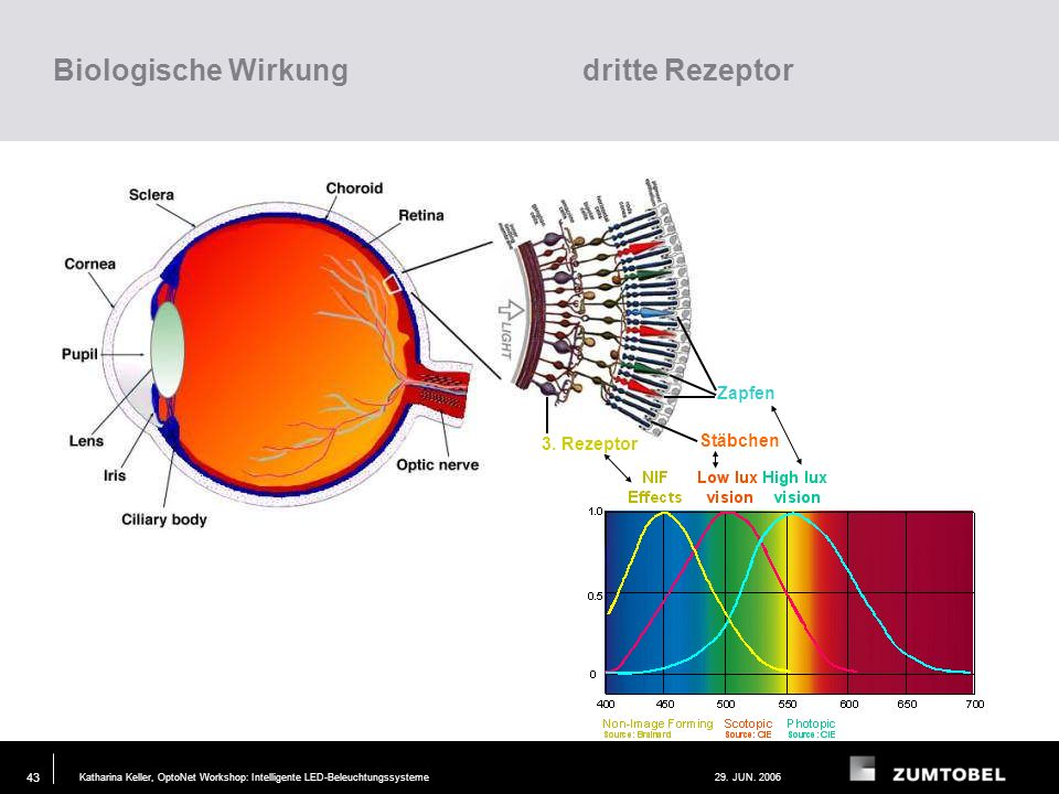 Katharina Keller, OptoNet Workshop: Intelligente LED-Beleuchtungssysteme29. JUN. 2006 42 Direkte Nervenbahnen vom Auge zum vegetativen Nervensystem (b