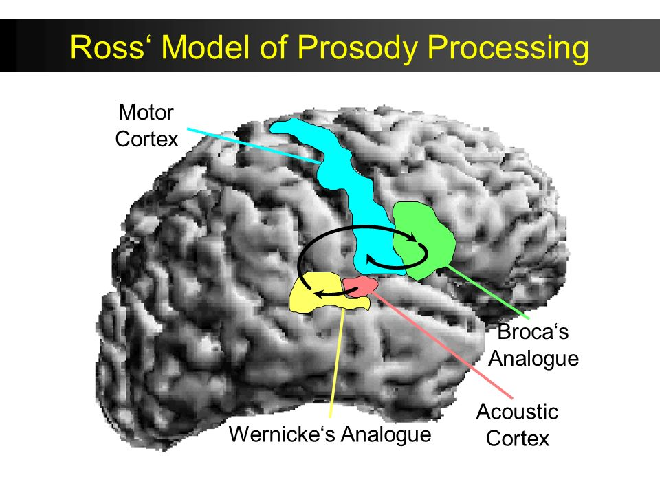 Motor Cortex Acoustic Cortex Brocas Analogue Wernickes Analogue Ross, Arch Neurol, 1981 Ross Model of Prosody Processing