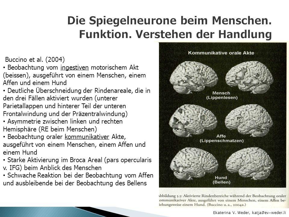 Buccino et al. (2004) Beobachtung vom ingestiven motorischem Akt (beissen), ausgeführt von einem Menschen, einem Affen und einem Hund Deutliche Übersc