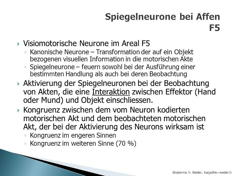 Visiomotorische Neurone im Areal F5 Kanonische Neurone – Transformation der auf ein Objekt bezogenen visuellen Information in die motorischen Akte Spi