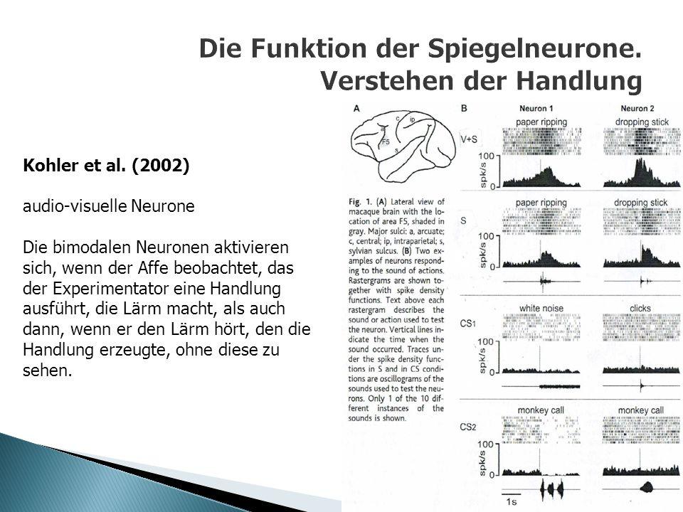 Kohler et al. (2002) audio-visuelle Neurone Die bimodalen Neuronen aktivieren sich, wenn der Affe beobachtet, das der Experimentator eine Handlung aus