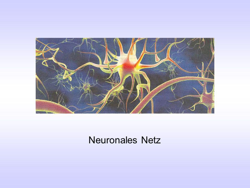Eingangsneuronen Zwischenneuronen Ausgangsneuron Neuronales Netz