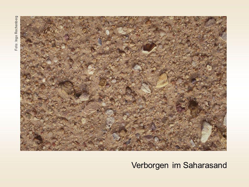 Verborgen im Saharasand Foto: Ingo Rechenberg