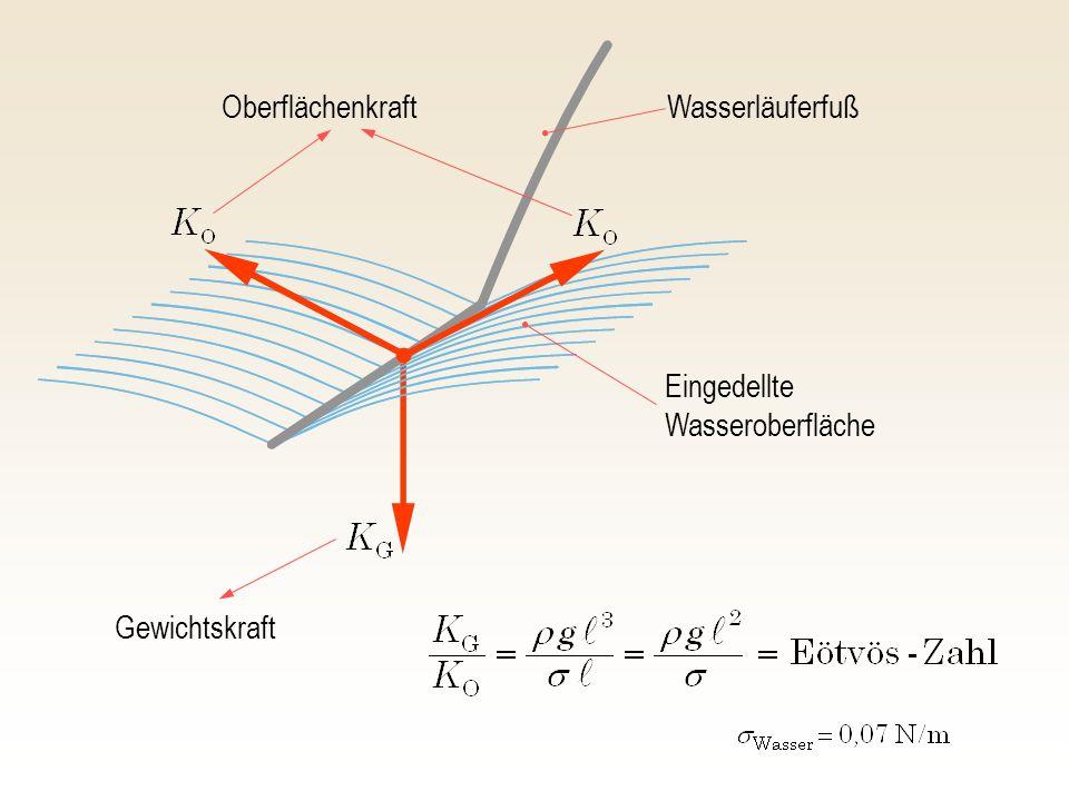 Oberflächenkraft Gewichtskraft Wasserläuferfuß Eingedellte Wasseroberfläche