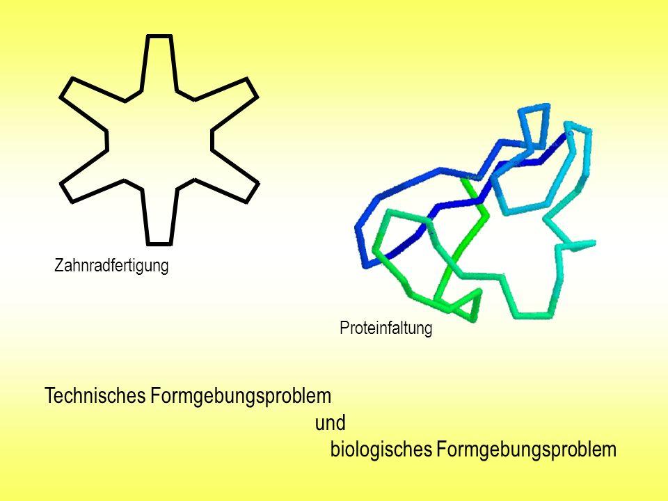 Proteinfaltung Zahnradfertigung Technisches Formgebungsproblem und biologisches Formgebungsproblem