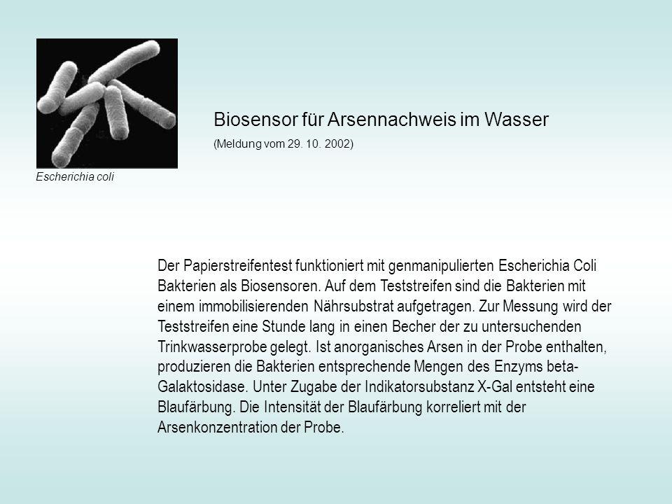 Der Papierstreifentest funktioniert mit genmanipulierten Escherichia Coli Bakterien als Biosensoren. Auf dem Teststreifen sind die Bakterien mit einem