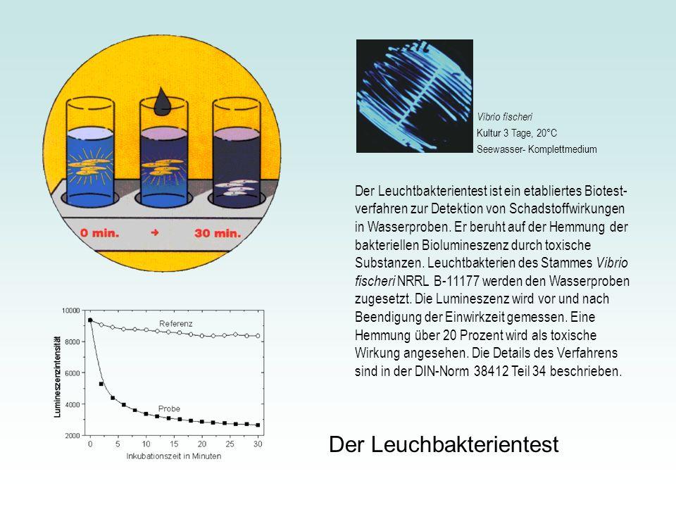 Der Leuchtbakterientest ist ein etabliertes Biotest- verfahren zur Detektion von Schadstoffwirkungen in Wasserproben. Er beruht auf der Hemmung der ba