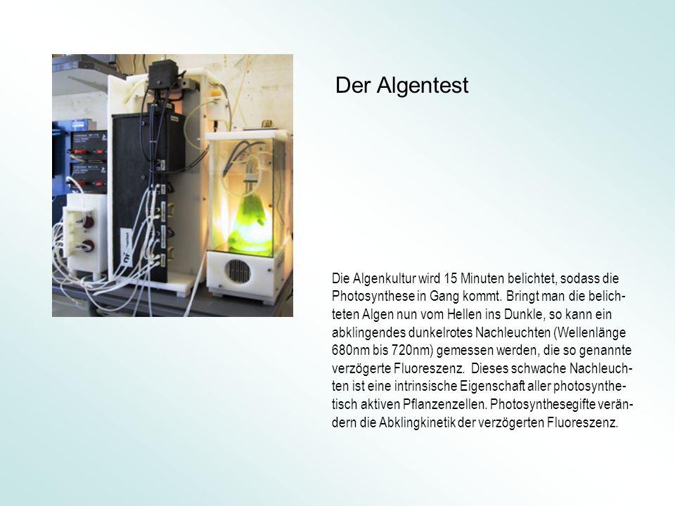 Der Elektroantennograph misst die elektrophysiologische Antwort einer isolierten Antenne von M.