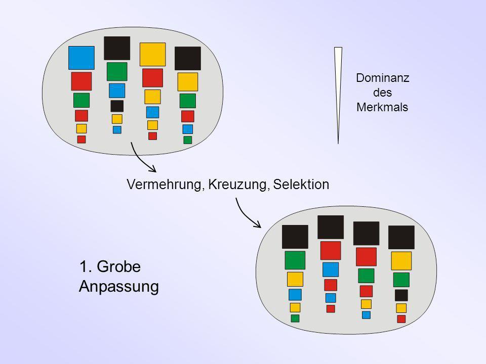 Vermehrung, Kreuzung, Selektion 1. Grobe Anpassung Dominanz des Merkmals