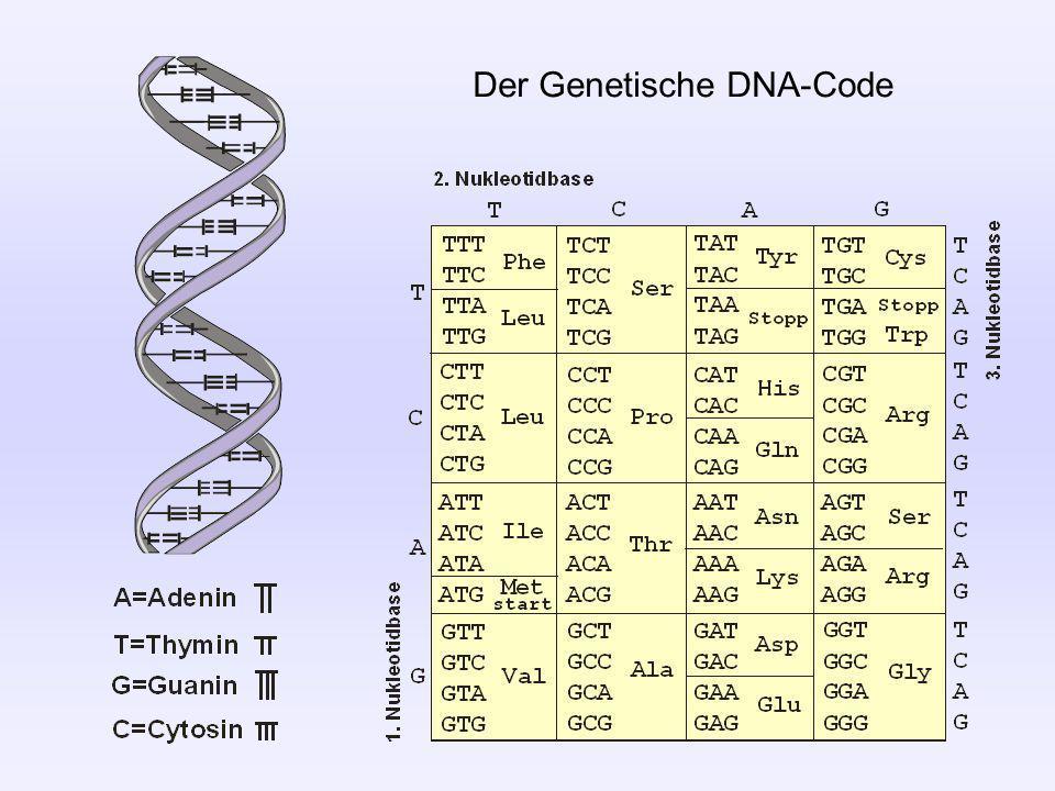 Die Zahl 2004 Im monoton steigenden Dezimal-Stellenwert-Code 2004 = 2·10 3 + 0·10 2 + 0·10 1 + 4·10 0 Im monoton steigenden Binär-Stellenwert-Code 11111010100 = 1·2 10 + 1·2 9 + 1·2 8 + 1·2 7 + 1·2 6 + 1·2 5 + 1·2 4 + 1·2 3 + 1·2 2 + 1·2 1 + 1·2 0 In einem alternierenden Binär-Stellenwert-Code 10101110110 = 1·2 10 + 0·2 0 + 1·2 9 + 0·2 1 + 1·2 8 + 1·2 2 + 1·2 7 + 0·2 3 + 1·2 6 + 1·2 4 + 0·2 5