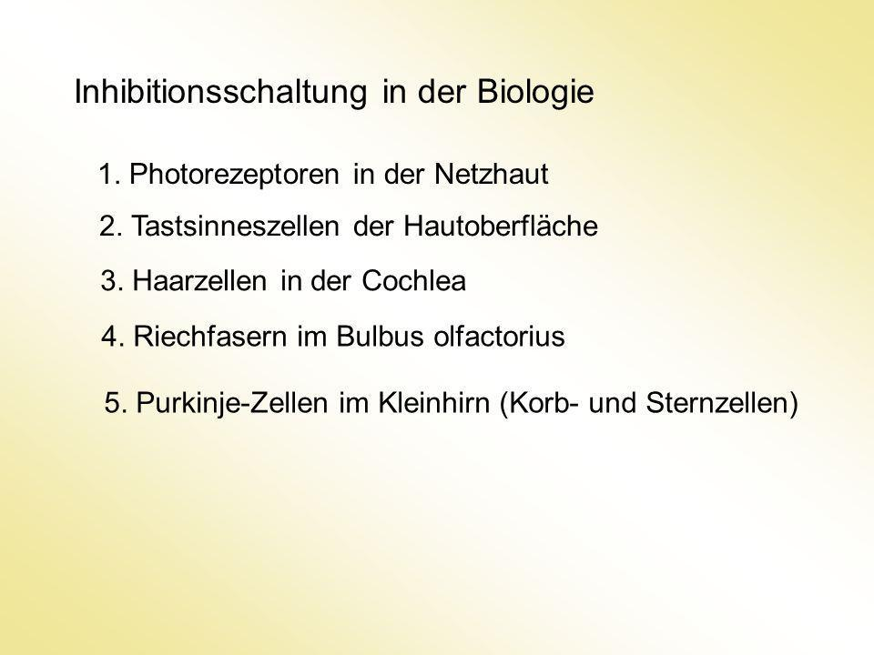 Inhibitionsschaltung in der Biologie 1. Photorezeptoren in der Netzhaut 2. Tastsinneszellen der Hautoberfläche 3. Haarzellen in der Cochlea 5. Purkinj