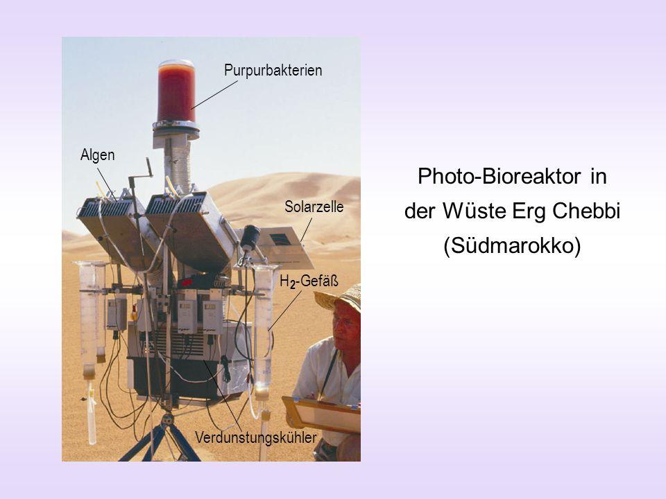 Photo-Bioreaktor in der Wüste Erg Chebbi (Südmarokko) Algen Purpurbakterien Solarzelle Verdunstungskühler H 2 -Gefäß