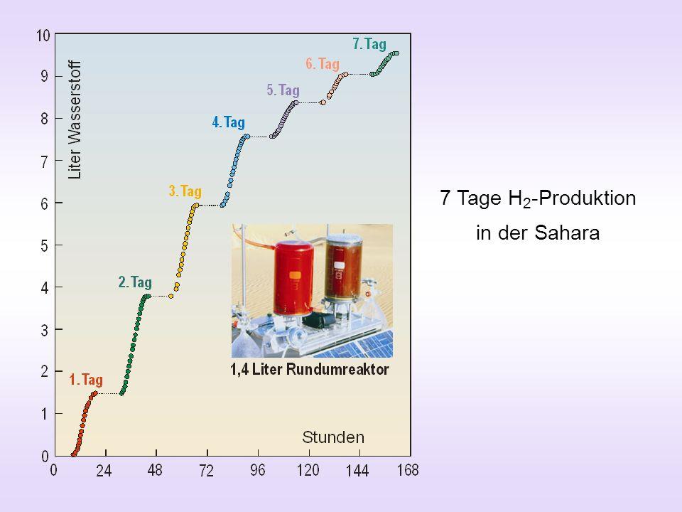 7 Tage H 2 -Produktion in der Sahara