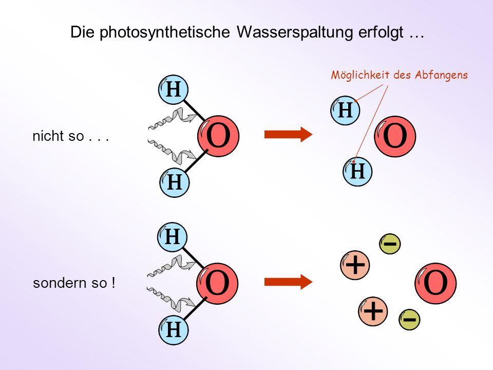 nicht so... sondern so ! Die photosynthetische Wasserspaltung erfolgt … Möglichkeit des Abfangens