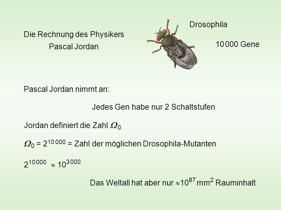 Drosophila 10 000 Gene Jedes Gen habe nur 2 Schaltstufen Pascal Jordan nimmt an: Jordan definiert die Zahl 0 0 = 2 10 000 = Zahl der möglichen Drosophila-Mutanten 2 10 000 10 3 000 Das Weltall hat aber nur 10 87 mm 2 Rauminhalt Die Rechnung des Physikers Pascal Jordan