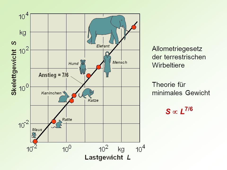 Allometriegesetz der terrestrischen Wirbeltiere S L 7/6 Theorie für minimales Gewicht