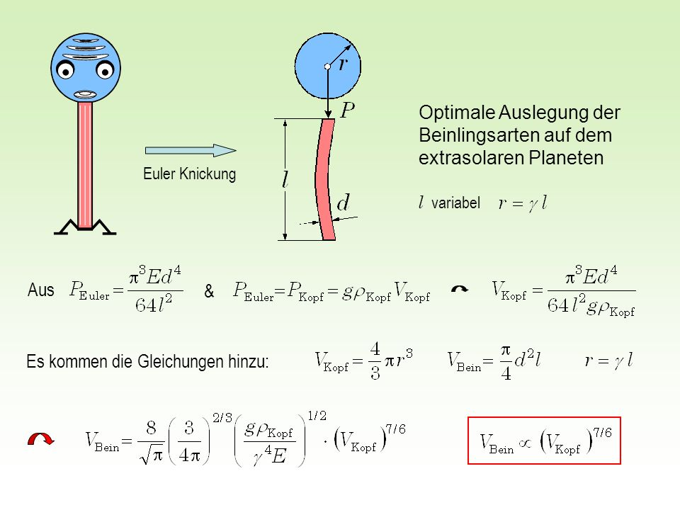 Aus & Optimale Auslegung der Beinlingsarten auf dem extrasolaren Planeten Es kommen die Gleichungen hinzu: Euler Knickung l variabel