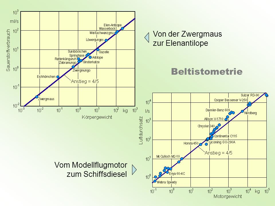 Von der Zwergmaus zur Elenantilope Vom Modellflugmotor zum Schiffsdiesel Beltistometrie