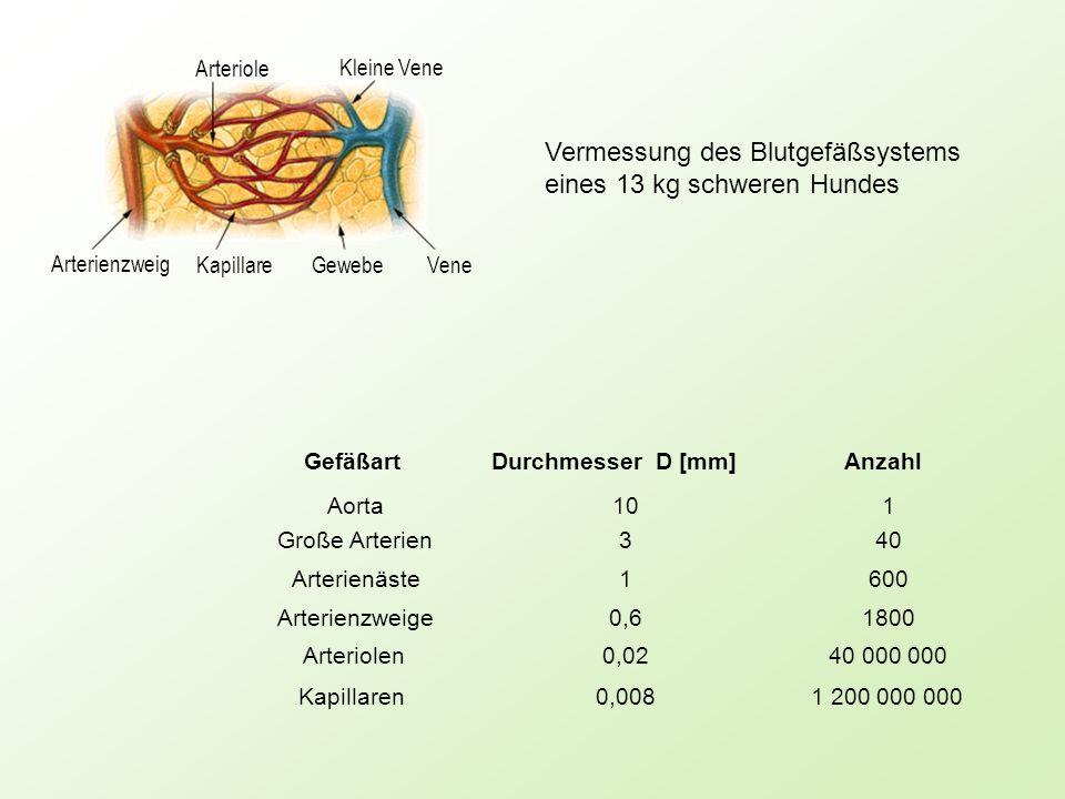 Aorta Arterienäste 10 3 9 6 z 5% + - Große Arterien Arterienzweige Arteriolen Kapillaren 10 1 0.1 0.01 10 0 D mm Gesetz der Verzweigung von Blutgefäßen Genauigkeit !